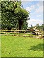 SJ7481 : Ancient Oak at Tatton Park by David Dixon