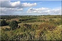 SP1566 : Plantations northeast of Henley-in-Arden by Robin Stott