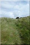 NU1535 : Bridleway through the long grass by DS Pugh