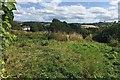 SX9073 : Derelict nursery, Bishopsteignton by Robin Stott