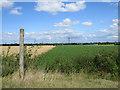 TL5765 : Footpath to Burwell by John Sutton