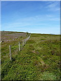 SJ1132 : Fenceline on Mynydd Tarw by Richard Law