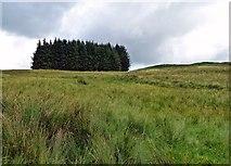 NX6592 : Southern Upland Way near Kiln Knowe by Mary and Angus Hogg