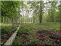 NJ0355 : Auld Kirk Wood by valenta