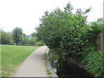 TQ1649 : Footpath along Pipp Brook, Dorking by Malc McDonald