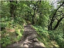 SK2579 : Path through Padley Gorge by Andrew Abbott