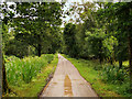 V9490 : Riverside Walk, Killarney National Park by David Dixon