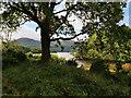 V9489 : Killarney National Park, Lough Leane by David Dixon