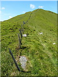 SJ0733 : Up Cadair Berwyn's north ridge by Richard Law
