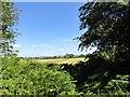 NZ1246 : Hay field beside Longedge Lane by Robert Graham