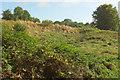 SU8447 : Hollow, Farnham Park by Derek Harper