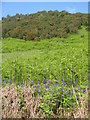 NM9835 : Wild hillside at Inveresragan by M J Richardson