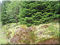 NM9738 : Forestry in Gleann Salach by M J Richardson