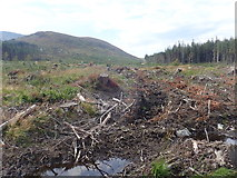 J3629 : Boggy clear felled area in Donard Wood by Eric Jones