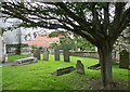 SK9324 : Tree in the churchyard of St John the Baptist by Mat Fascione