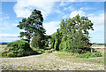 NZ1771 : Farm track between trees by Trevor Littlewood