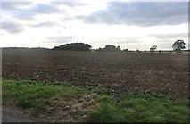 TL2457 : Field by Abbotsley Road by David Howard
