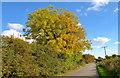 ST8180 : Littleton Drew Lane, Acton Turville, Gloucestershire 2015 by Ray Bird