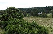 NH8422 : Juniper at Insharn by Anne Burgess