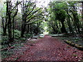 SS8873 : Path through Slade Wood, Southerndown by Jaggery