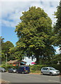 SX9364 : Tree by Stoodley Green by Derek Harper