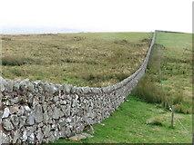 NU0013 : Wall on Lumsden Hill by Geoff Holland