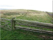 NU0013 : Boundary fence near Lumsden Hill by Geoff Holland