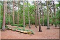 SJ2485 : Woodland on Thurstaston Common by Jeff Buck