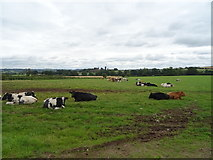 SJ8931 : Cattle Pire Hill by JThomas