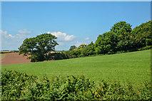 SX8460 : Berry Pomeroy : Grassy Field by Lewis Clarke