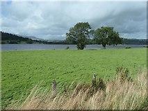 SH8931 : Trees on the east shore of Llyn Tegid / Bala Lake by Christine Johnstone