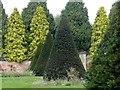 SK5453 : Newstead Abbey Gardens – Evergreens by Alan Murray-Rust
