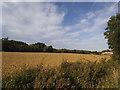 SE3937 : Wheatfield off Rakehill Road, Barwick-in-Elmet  by Stephen Craven