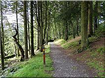 SN7673 : Hafod Forest by John Lucas