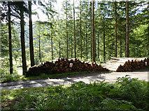 SN7673 : Wood stacks near Dologau by John Lucas