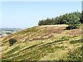 NZ1441 : Hill slope at nature reserve by Trevor Littlewood