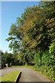SX7256 : Tree at Diptford by Derek Harper