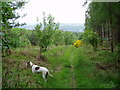 NZ1058 : Path at the top of Milkwellburn Wood by john durkin