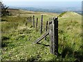 SO5984 : Fence and fence posts on Clee Burf by Philip Halling
