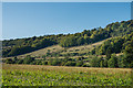 TQ1450 : Denbies Hillside by Ian Capper