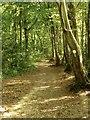 TQ7109 : Freehold Wood by Simon Carey