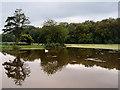 NS2209 : Culzean Castle Country Park, The Swan Pond by David Dixon