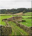 SD8362 : Grassy lane passing ruined barn by Trevor Littlewood