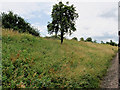 SP0634 : Lone Tree by the Trackside by David Dixon