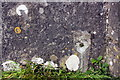 NY7507 : Scar left on wall of railway bridge SAC/186 by removal of benchmark by Roger Templeman