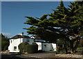 SX9575 : Toll-house and cedar, Old Teignmouth Road by Derek Harper