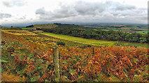 NZ5712 : Cliff Rigg and Newton Wood by Mick Garratt