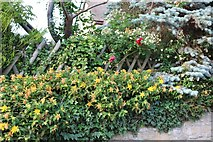 SP9694 : Garden on Main Street, Bulwick by David Howard