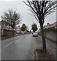 ST1680 : Tree-lined Ty'n-y-cae Grove, Rhiwbina, Cardiff by Jaggery
