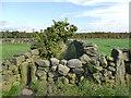 SE0937 : Walled path on the Bradford Millennium Way by Stephen Craven